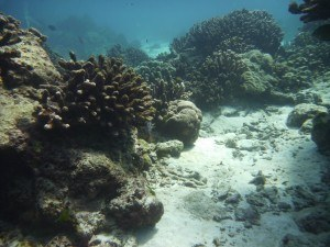 Natural Reef Flow Water Movement