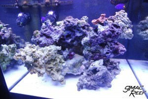 Coralline Algae Growth Progression 1/3