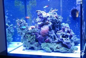 Coralline Algae Growth Progress 2/3