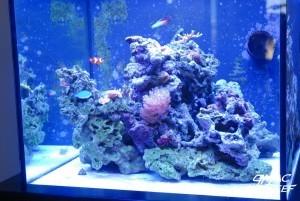 Coralline Algae Growth Progress 2/3