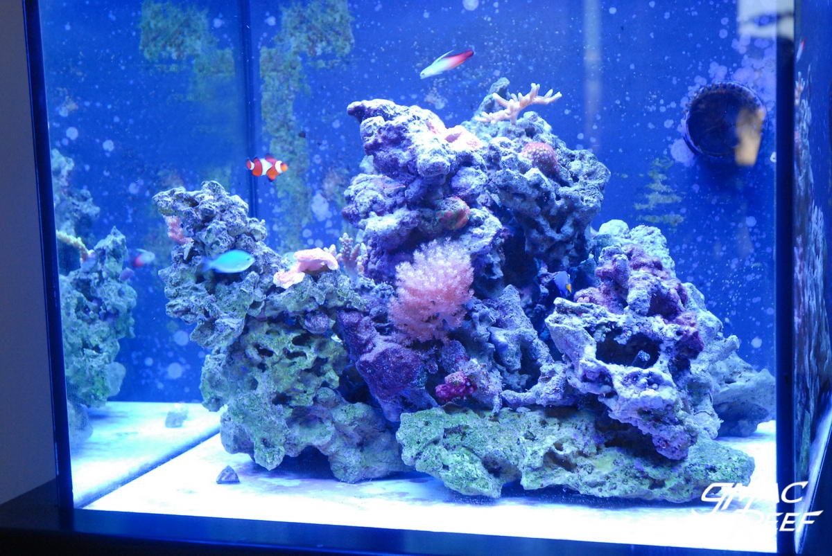 reef tank rockscape: how to drill and cement your live rock | gmacreef
