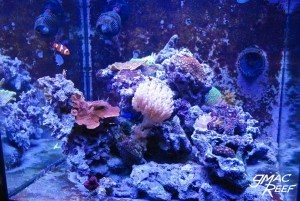 Coralline Algae Growth Progress 3/3